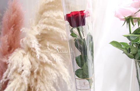 6F 2020愛你愛你玫瑰情