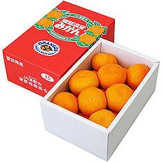 愛知縣 蒲郡溫室蜜柑 2.5KG/盒