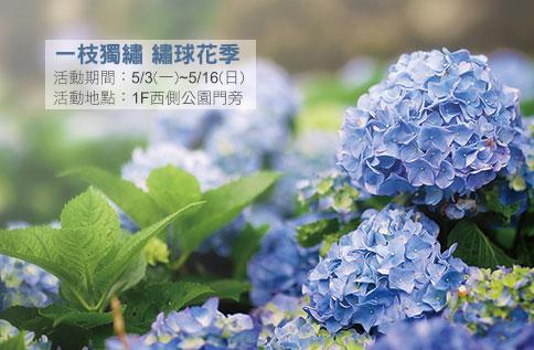 一枝獨繡 繡球花季